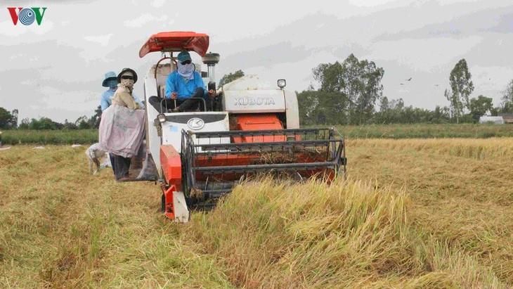 国家の食料安全保障に貢献する南部メコンデルタ - ảnh 1