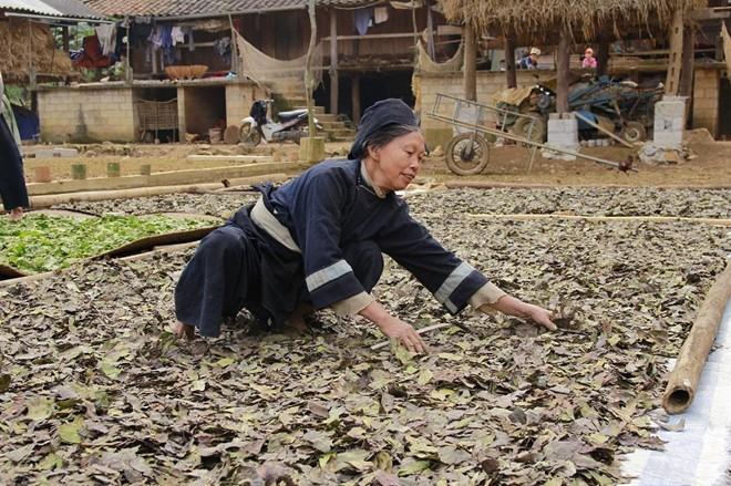 ヌン族の伝統的な線香製造職業 - ảnh 2