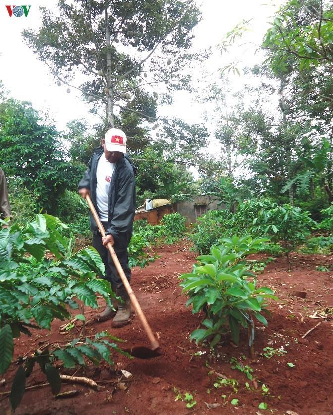 気候変動に対応コーヒーと果樹の混植栽培モデルの発展 - ảnh 1