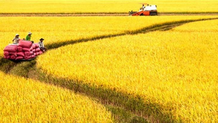ベトナム、農業発展を促進  - ảnh 1