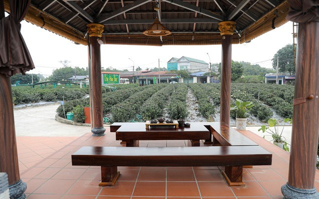 タンクオン茶の商標作りと観光発展を結びつける - ảnh 2