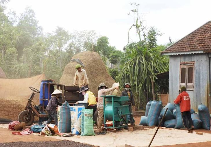 ハバウ村の変貌 - ảnh 2