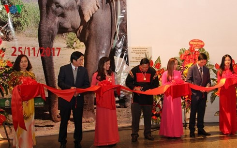 "Pembukaan pameran bahan dan benda: ""Gajah di daerah Tay Nguyen"" - ảnh 1"
