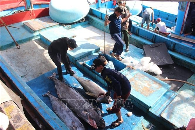 Badan-badan usaha Israel memperhatikan penguatan impor bermacam jenis  barang Vietnam - ảnh 1