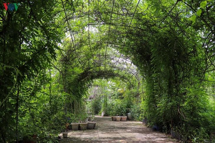 """Lạc vào """"khu vườn cổ tích"""" rực rỡ sắc hồng tường vi ở Hà Nội - ảnh 10"""