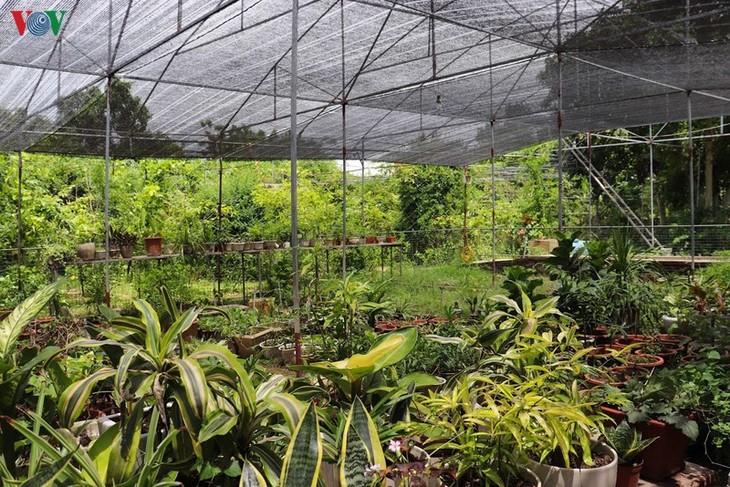 """Lạc vào """"khu vườn cổ tích"""" rực rỡ sắc hồng tường vi ở Hà Nội - ảnh 11"""