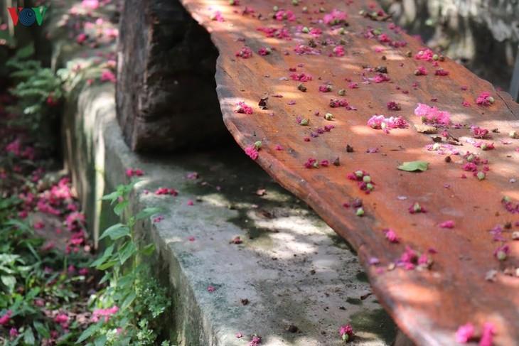 """Lạc vào """"khu vườn cổ tích"""" rực rỡ sắc hồng tường vi ở Hà Nội - ảnh 5"""