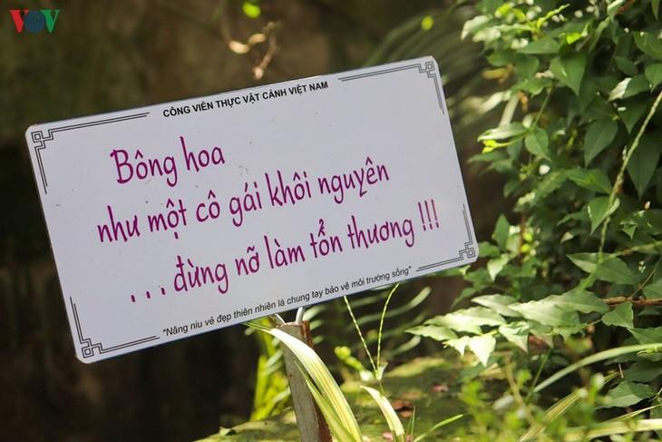 """Lạc vào """"khu vườn cổ tích"""" rực rỡ sắc hồng tường vi ở Hà Nội - ảnh 9"""