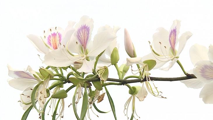 Lên Sơn La thưởng thức món ăn hấp dẫn từ hoa ban - ảnh 3