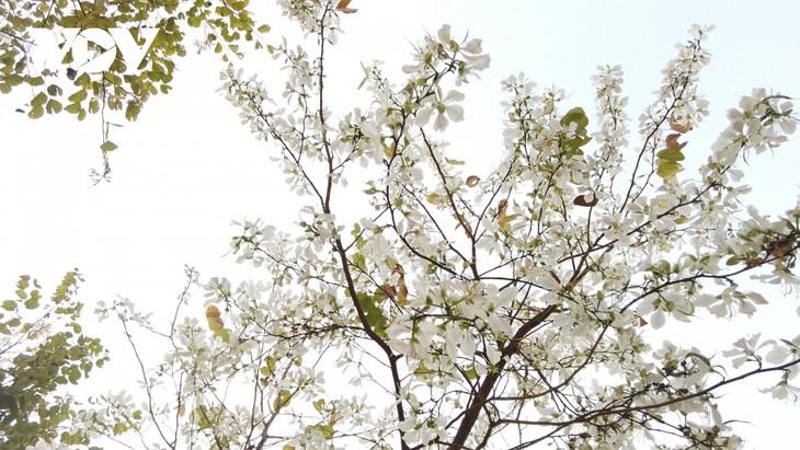Lên Sơn La thưởng thức món ăn hấp dẫn từ hoa ban - ảnh 1