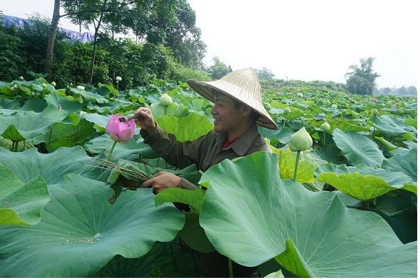 Lê Son Hai et sa marque de thé organique - ảnh 1
