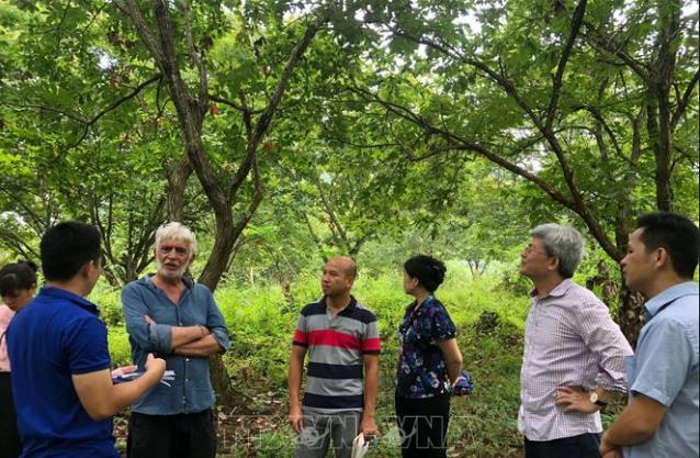 Cao Bang travaille avec des experts du Réseau mondial des géoparcs - ảnh 1