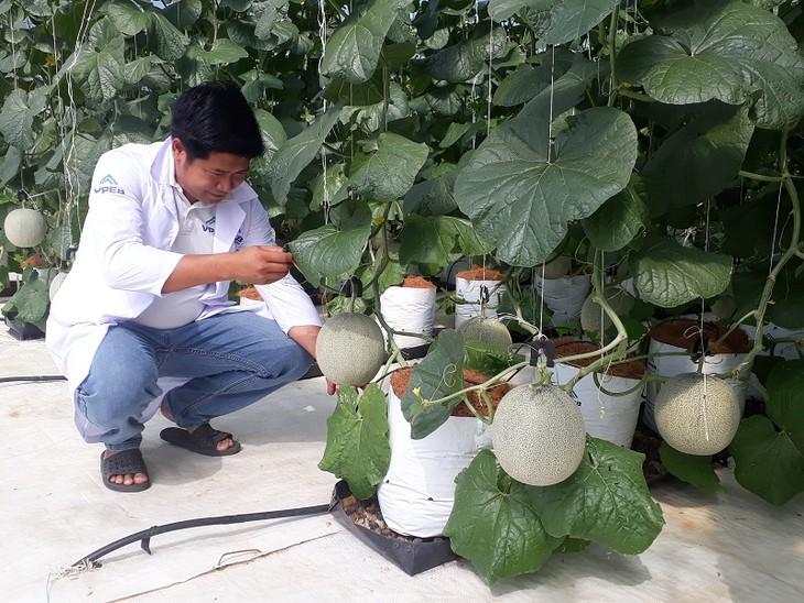 Les produits agricoles de Binh Thuân à la conquête du marché international - ảnh 1