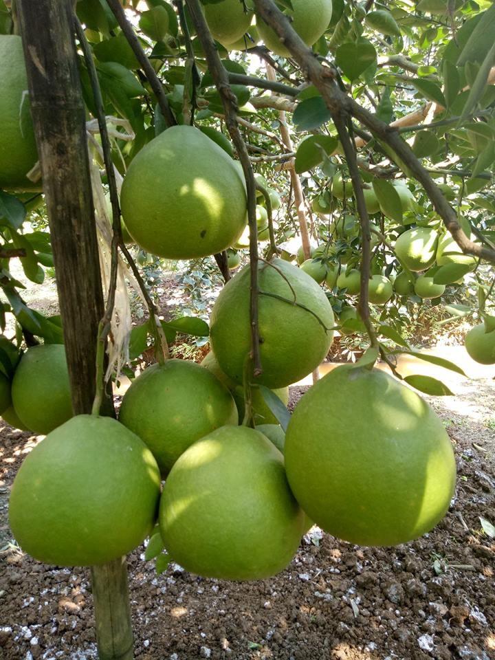 Les sites touristiques les plus visités de Dông Nai - ảnh 2