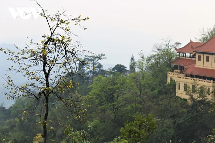 Mùa xuân lên núi thiêng, ngắm mai vàng Yên Tử - ảnh 8