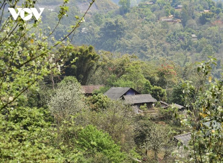 Hoa Sơn Tra nở trắng trên đỉnh Pha Đin - ảnh 1