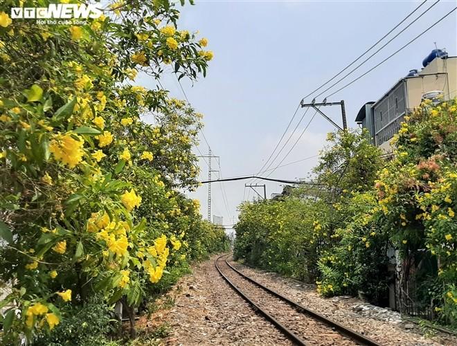 Hoa huỳnh liên vàng rực dưới nắng Sài Gòn - ảnh 1