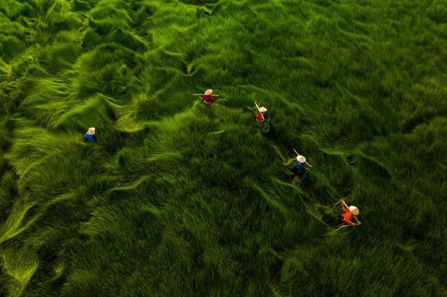 Ảnh người phụ nữ phơi cá của Việt Nam là bức ảnh du lịch đẹp nhất - ảnh 3