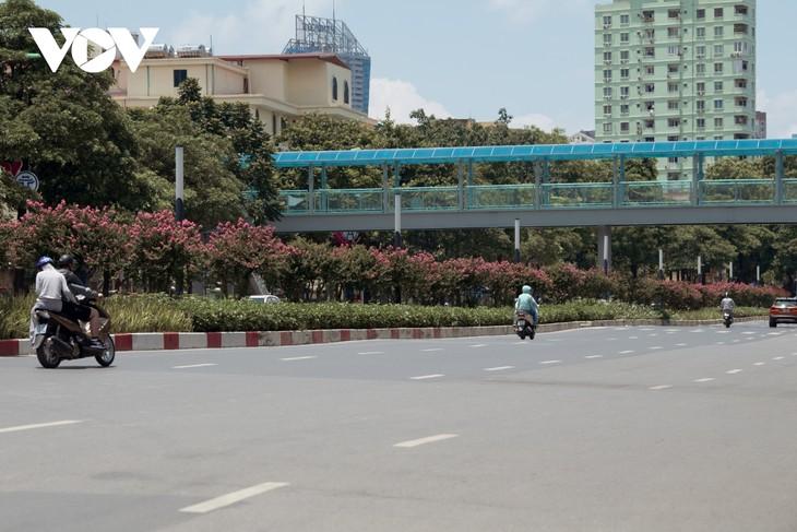 """Ngắm hoa tường vi khoe sắc trên con đường từng được mệnh danh """"đẹp nhất Việt Nam"""" - ảnh 3"""