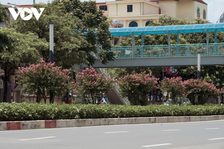 """Ngắm hoa tường vi khoe sắc trên con đường từng được mệnh danh """"đẹp nhất Việt Nam"""" - ảnh 14"""