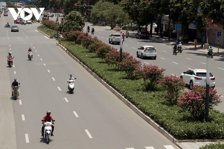 """Ngắm hoa tường vi khoe sắc trên con đường từng được mệnh danh """"đẹp nhất Việt Nam"""" - ảnh 2"""