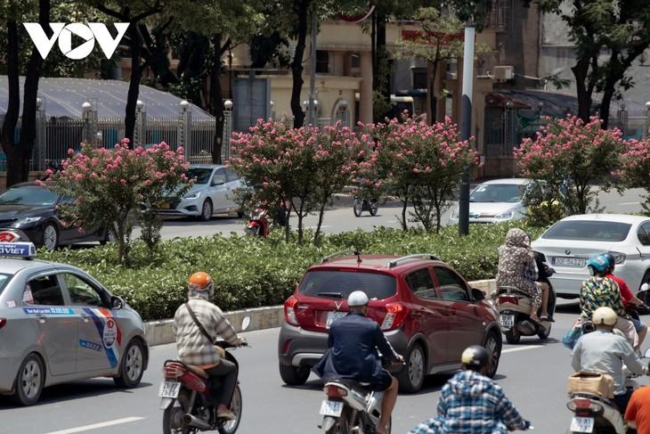 """Ngắm hoa tường vi khoe sắc trên con đường từng được mệnh danh """"đẹp nhất Việt Nam"""" - ảnh 10"""