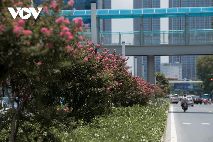 """Ngắm hoa tường vi khoe sắc trên con đường từng được mệnh danh """"đẹp nhất Việt Nam"""" - ảnh 7"""