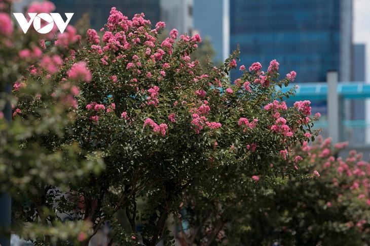"""Ngắm hoa tường vi khoe sắc trên con đường từng được mệnh danh """"đẹp nhất Việt Nam"""" - ảnh 4"""