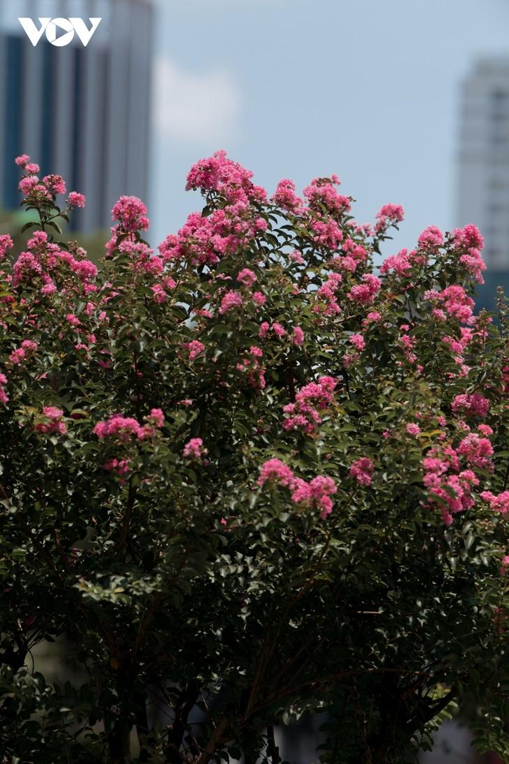 """Ngắm hoa tường vi khoe sắc trên con đường từng được mệnh danh """"đẹp nhất Việt Nam"""" - ảnh 5"""