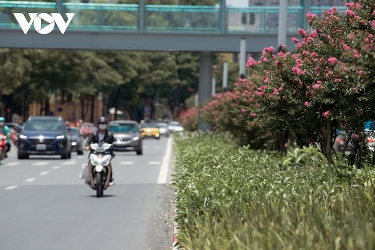 """Ngắm hoa tường vi khoe sắc trên con đường từng được mệnh danh """"đẹp nhất Việt Nam"""" - ảnh 9"""