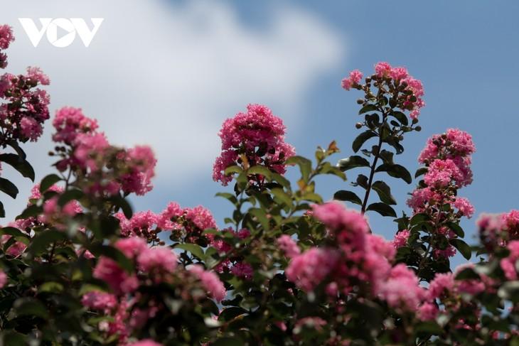 """Ngắm hoa tường vi khoe sắc trên con đường từng được mệnh danh """"đẹp nhất Việt Nam"""" - ảnh 8"""