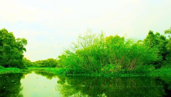 Vẻ đẹp rừng tràm Trà Sư ở An Giang - ảnh 9