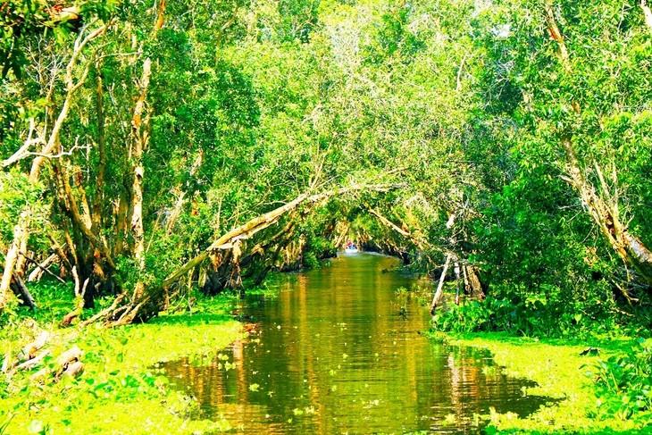 Vẻ đẹp rừng tràm Trà Sư ở An Giang - ảnh 7