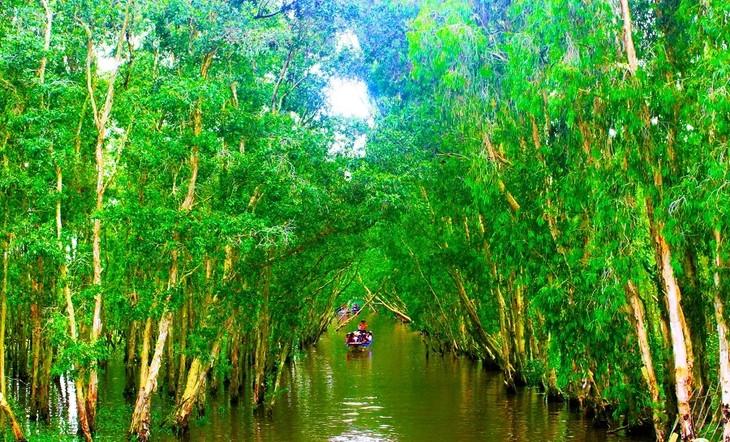 Vẻ đẹp rừng tràm Trà Sư ở An Giang - ảnh 6