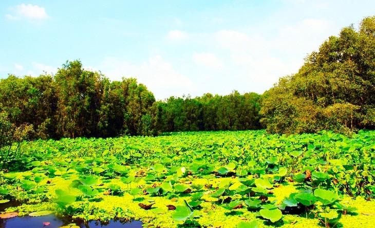 Vẻ đẹp rừng tràm Trà Sư ở An Giang - ảnh 4