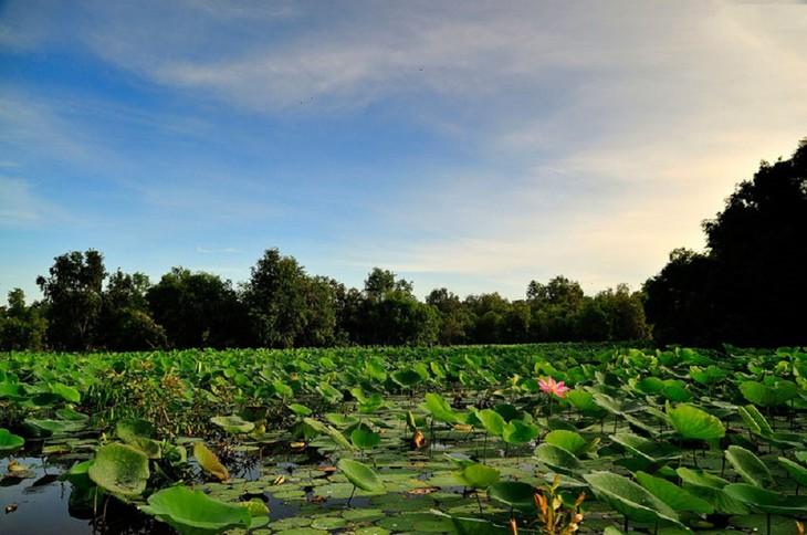 Vẻ đẹp rừng tràm Trà Sư ở An Giang - ảnh 5