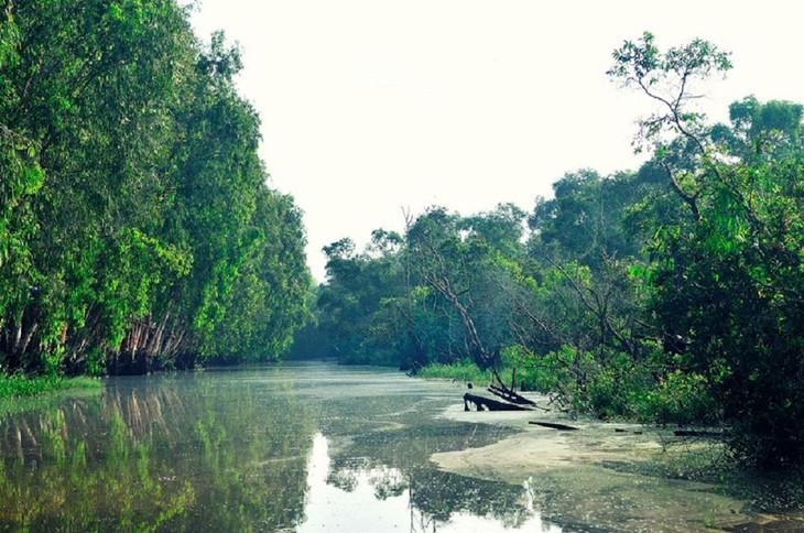 Vẻ đẹp rừng tràm Trà Sư ở An Giang - ảnh 1