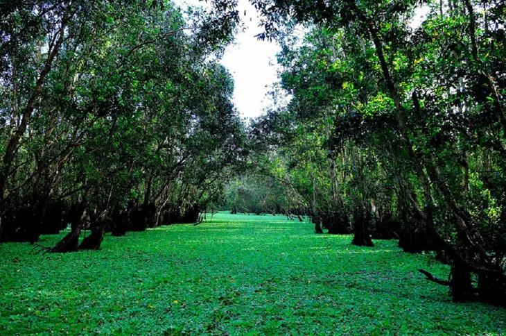 Vẻ đẹp rừng tràm Trà Sư ở An Giang - ảnh 2