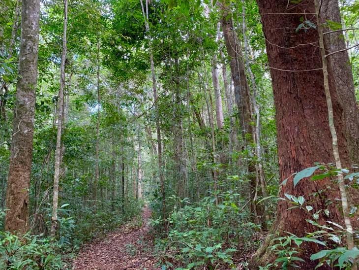 Việt Nam có thêm 2 khu dự trữ sinh quyển thế giới - ảnh 13