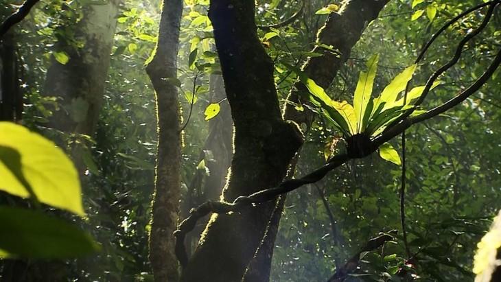 Việt Nam có thêm 2 khu dự trữ sinh quyển thế giới - ảnh 12