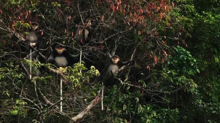 Việt Nam có thêm 2 khu dự trữ sinh quyển thế giới - ảnh 15