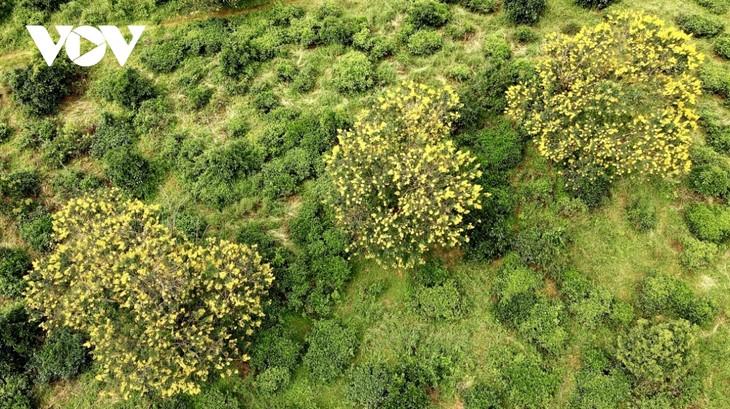 Sắc hoa vàng tuyệt đẹp trên cao nguyên  - ảnh 6