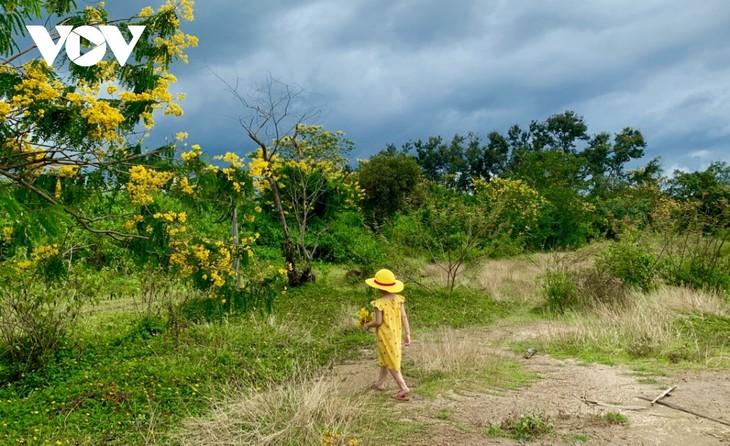 Sắc hoa vàng tuyệt đẹp trên cao nguyên  - ảnh 7