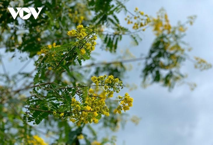 Sắc hoa vàng tuyệt đẹp trên cao nguyên  - ảnh 8