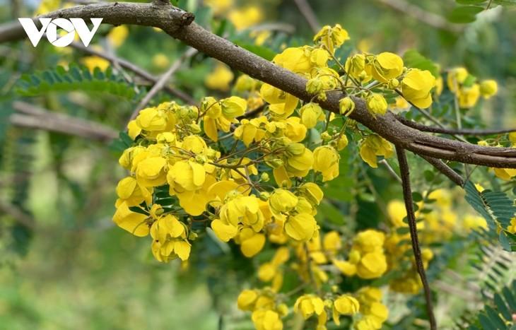 Sắc hoa vàng tuyệt đẹp trên cao nguyên  - ảnh 9