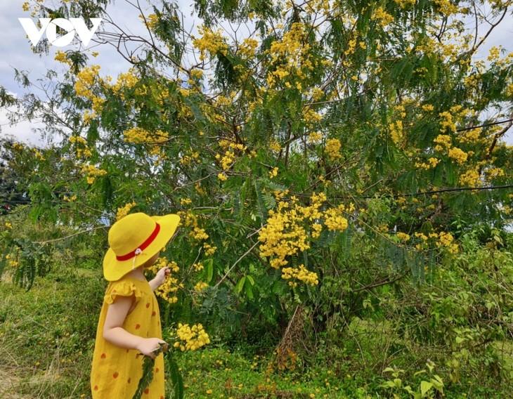 Sắc hoa vàng tuyệt đẹp trên cao nguyên  - ảnh 2