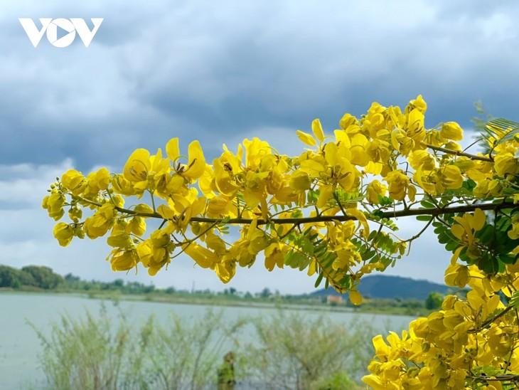 Sắc hoa vàng tuyệt đẹp trên cao nguyên  - ảnh 5