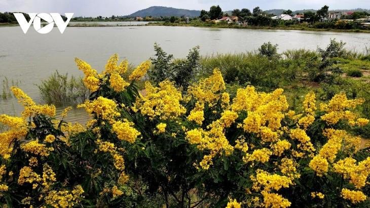 Sắc hoa vàng tuyệt đẹp trên cao nguyên  - ảnh 3