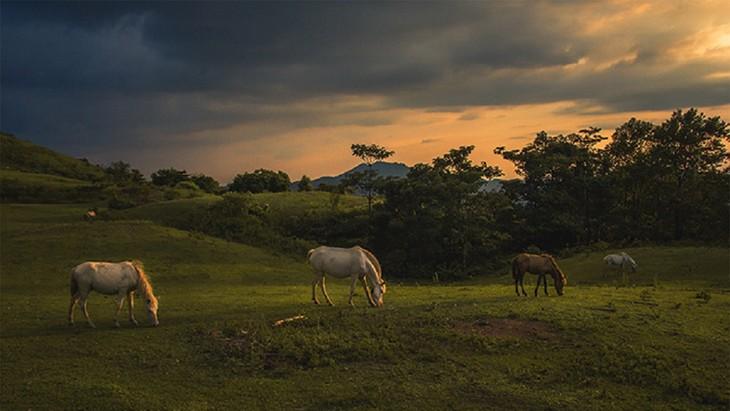 """Thăm """"bạch mã"""" ở thảo nguyên Khau Sao, Lạng Sơn - ảnh 11"""