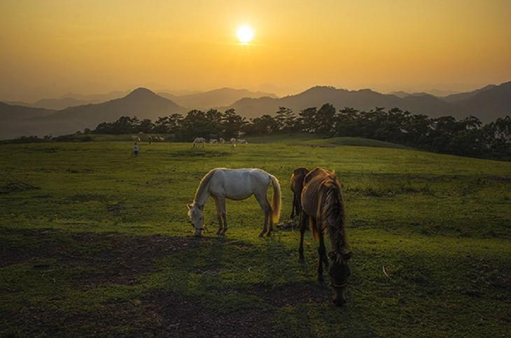 """Thăm """"bạch mã"""" ở thảo nguyên Khau Sao, Lạng Sơn - ảnh 12"""